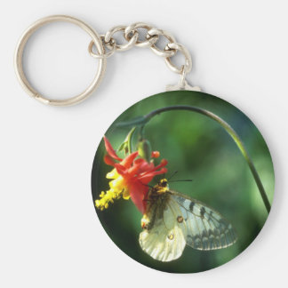 Parnassium Butterfly Key Chain