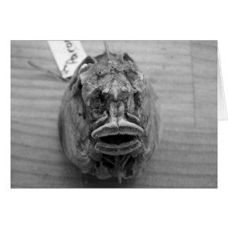 Parore Fish Skull Greeting Card