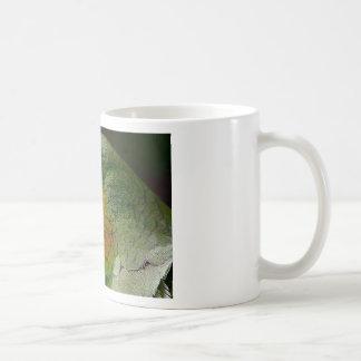 Parrot Amazon Animals Bird Green Exotic Bird Coffee Mug