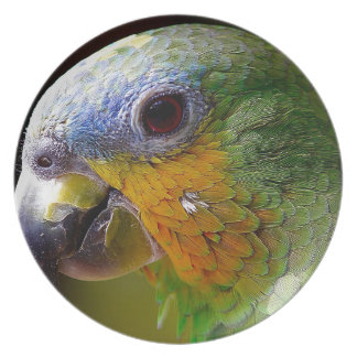 Parrot Amazon Animals Bird Green Exotic Bird Plate