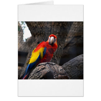 Parrot Bird Papużka Pet Ara Wings Beak Animal Card