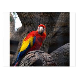 Parrot Bird Papużka Pet Ara Wings Beak Animal Postcard