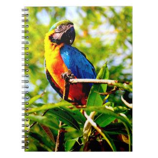 Parrot bird picture spiral notebooks