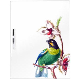 Parrot Bird Wildlife Animal Dry Erase Board