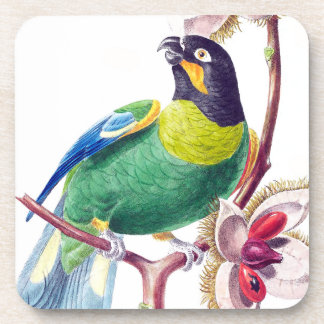 Parrot Bird Wildlife Animals Jungle Coaster