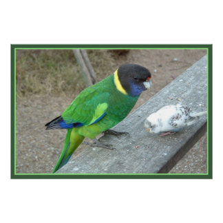 parrot budgie print with border