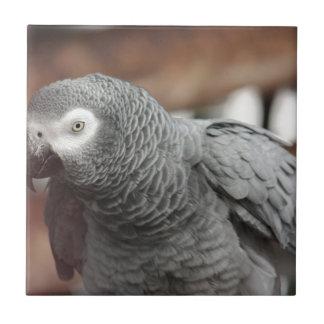 Parrot Ceramic Tile
