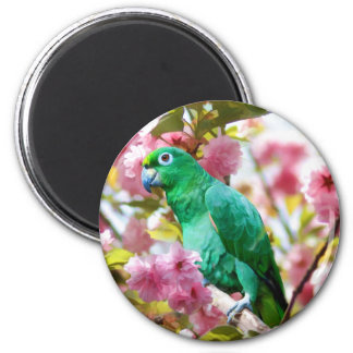 Parrot in Cherry Blossoms Magnet