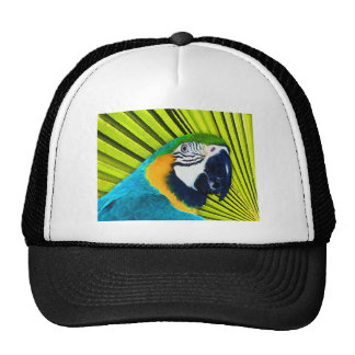 Parrot In Palm Tree Cap