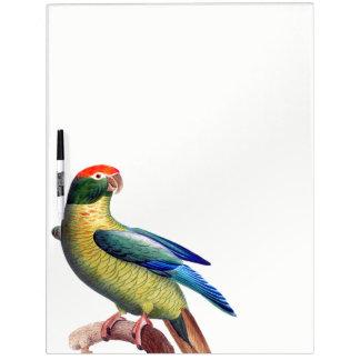 Parrot Parakeet Bird Animal Dry Erase Board