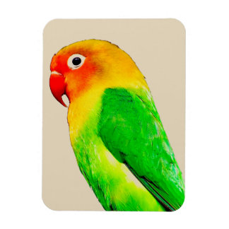 Parrot Photo Magnet - Home Decor