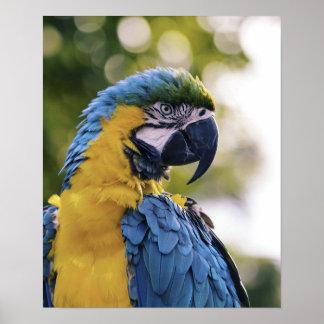 Parrot Profile Portrait Photograph Poster
