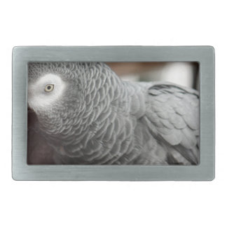 Parrot Rectangular Belt Buckle