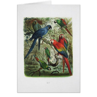 parrot, vintage, print collection, 1848 card