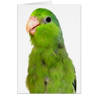 Parrotlet Bird Missing You greeting sympathy card