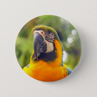 Parrots 6 Cm Round Badge
