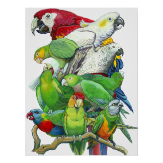 Parrots and Parakeets Print