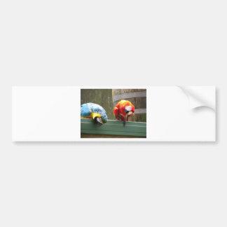 Parrots Car Bumper Sticker