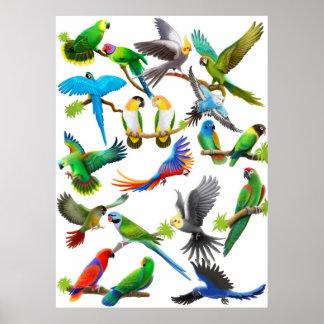 Parrots Galore Poster