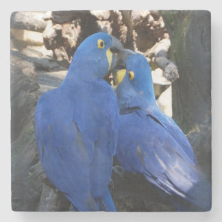 Parrots Marble Stone Coaster