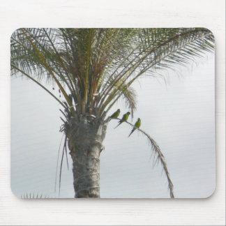 Parrots Palm Tree Mousepad