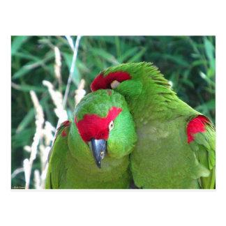 Parrots Postcard