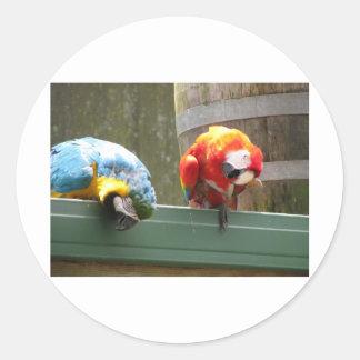 Parrots Round Sticker
