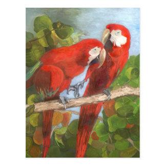 Parrots Sharing Secrets Postcard