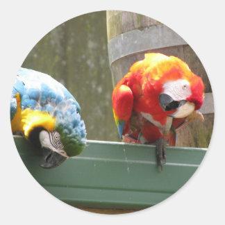 Parrots Classic Round Sticker