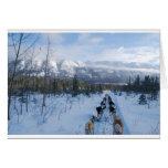ParrotSleds - Landscape Greeting Card