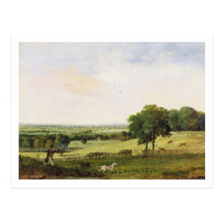 Partridge Shooting (oil on millboard) Postcard