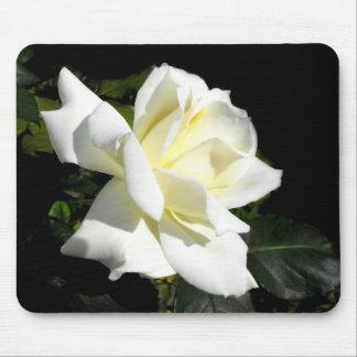 Pascali white hybrid tea rose mouse pad