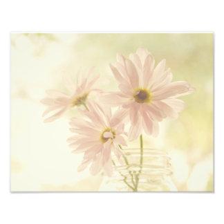 Pasel Pink Daisies Photograph