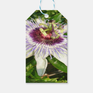 Passiflora Close Up With Garden Background Gift Tags