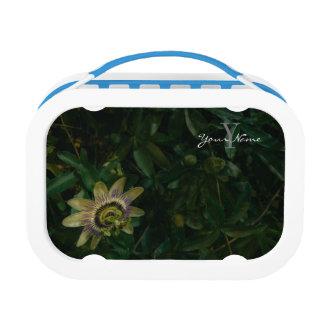 passiflora lunch box