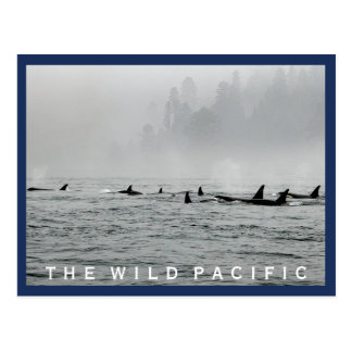 Passing Whales Postcard