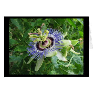 Passion Flower Card