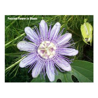 Passion Flower Postcard