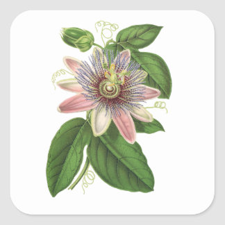 Passion flower square sticker