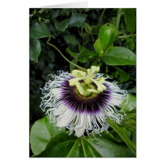 Passion Fruit Flower Card