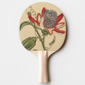 Passionflower Flower Floral Paddle