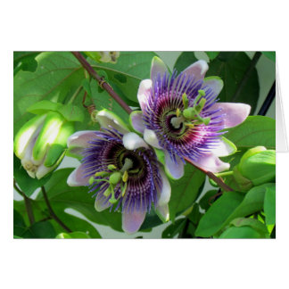 Passionflower Greeting Card