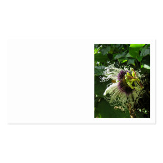 Passionfruit Blossom Pack Of Standard Business Cards