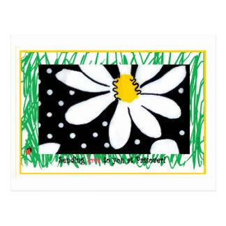 Passover Daisy Postcard