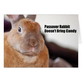 Passover Rabbit Says Card