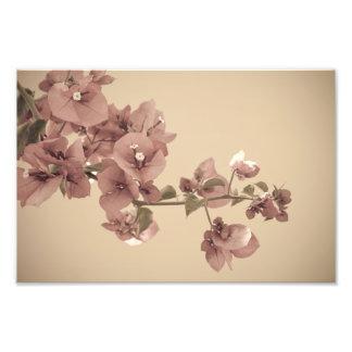 Pastel blossoms photo print