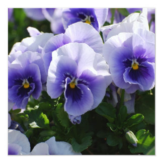 Pastel Blue Pansies Personalized Invitations