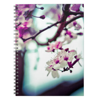 Pastel cherry blossom photo notebooks