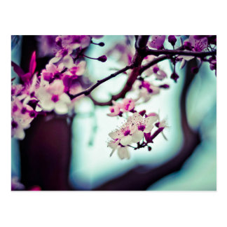 Pastel cherry blossom photo postcard