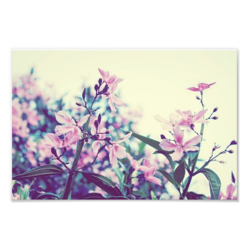Pastel Floral Branches Photograph
